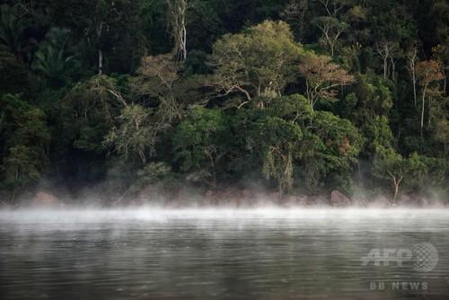 世界の樹木種を初調査、9600種が絶滅危機