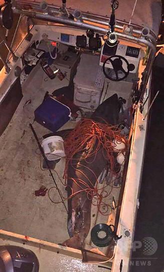 ホホジロザメがボートに飛び乗る、乗っていた漁師は無事に生還 豪
