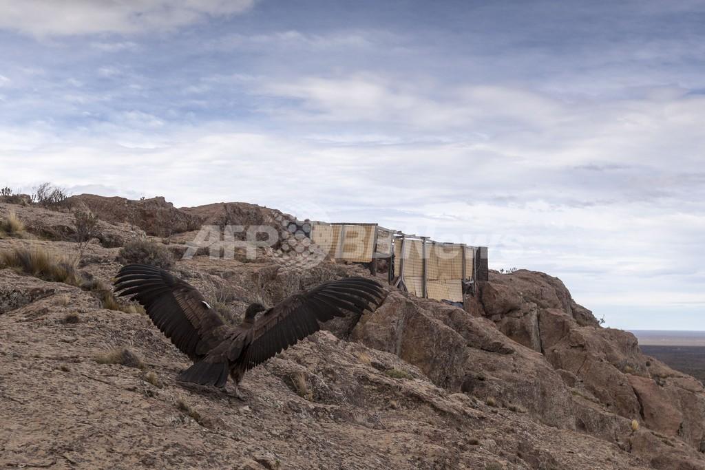 羽ばたけコンドル、空の王者復権への一歩になるか アルゼンチン