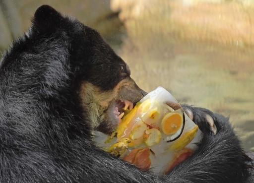動物もあま~い氷がお好き? 気温は40度 ブラジル・リオ
