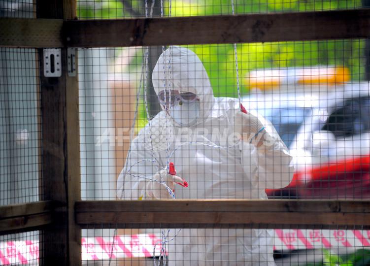 宮崎県で鳥インフル確認、1万羽殺処分