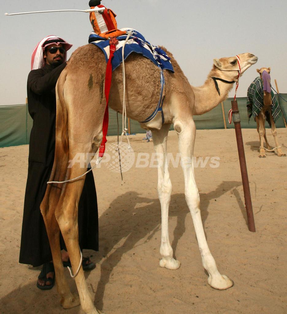 ながーい足で勝負!クウェートのラクダレース