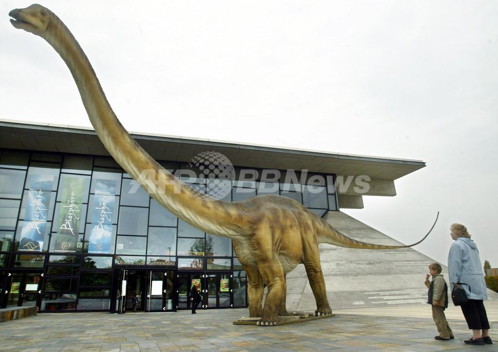 草食恐竜の「デンタルケア」、1~2か月で新しい歯に