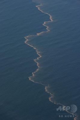 イルカの肺疾患と大量死、BP原油流出に起因 研究報告