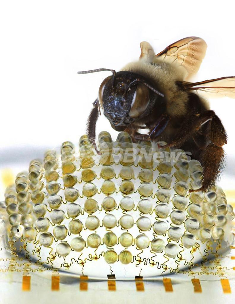 昆虫をまねた複眼レンズのカメラを開発、米研究チーム 写真2枚 国際 ...