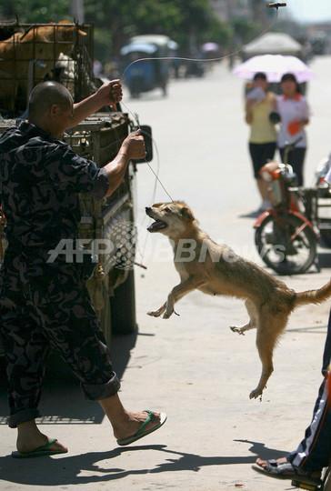 犬の登録と予防接種で狂犬病対策、未登録の犬は1億5000万匹も 中国