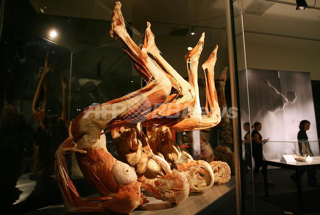 ロスの実物人体標本展覧会「人体の世界3」、美容体操中の標本も登場