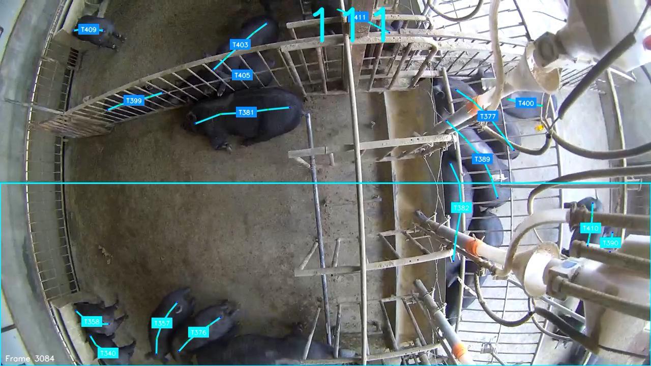 豚も「顔認証」、AI技術で飼育状況をモニタリング 中国の養豚場