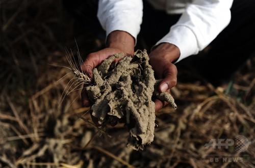 外来種の昆虫、世界で約7.9兆円の被害