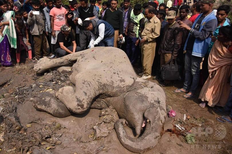 ゾウの群れに旅客列車が衝突、4頭死ぬ インド