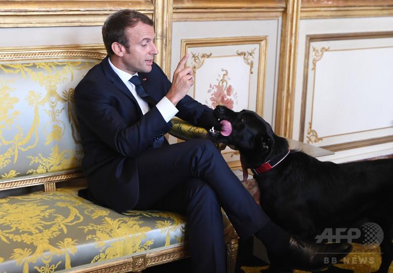 仏大統領の「ファーストドッグ」、会議中にエリゼ宮の暖炉でおしっこ