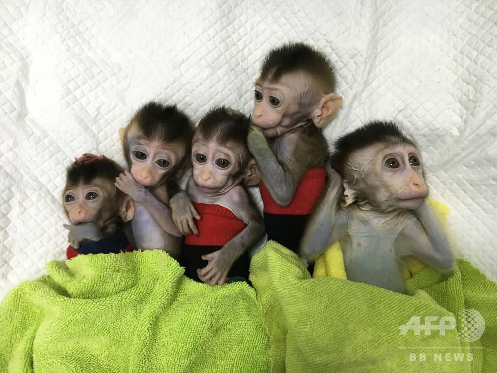 遺伝子操作でサルに睡眠障害、そのクローン5匹誕生 中国