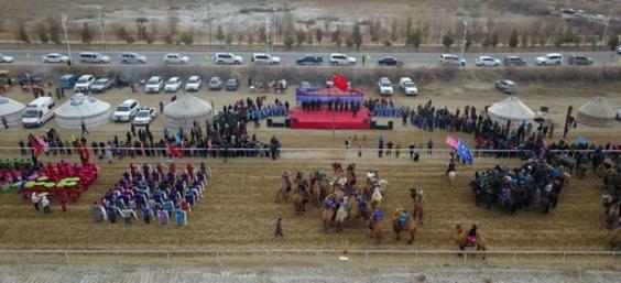 ラクダが走る! 新疆で初めてレース開催