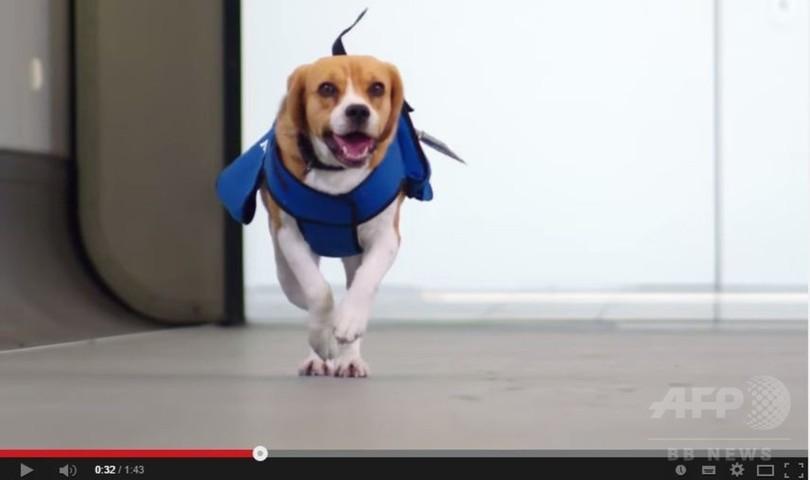 所有者に遺失物届ける「従業犬」、KLMオランダ航空