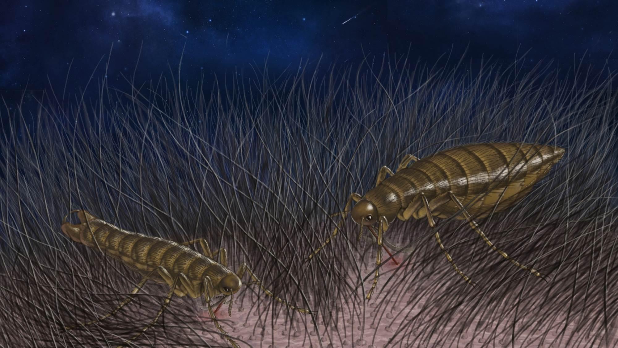 中英の古生物学者、ノミの進化の歴史を解明
