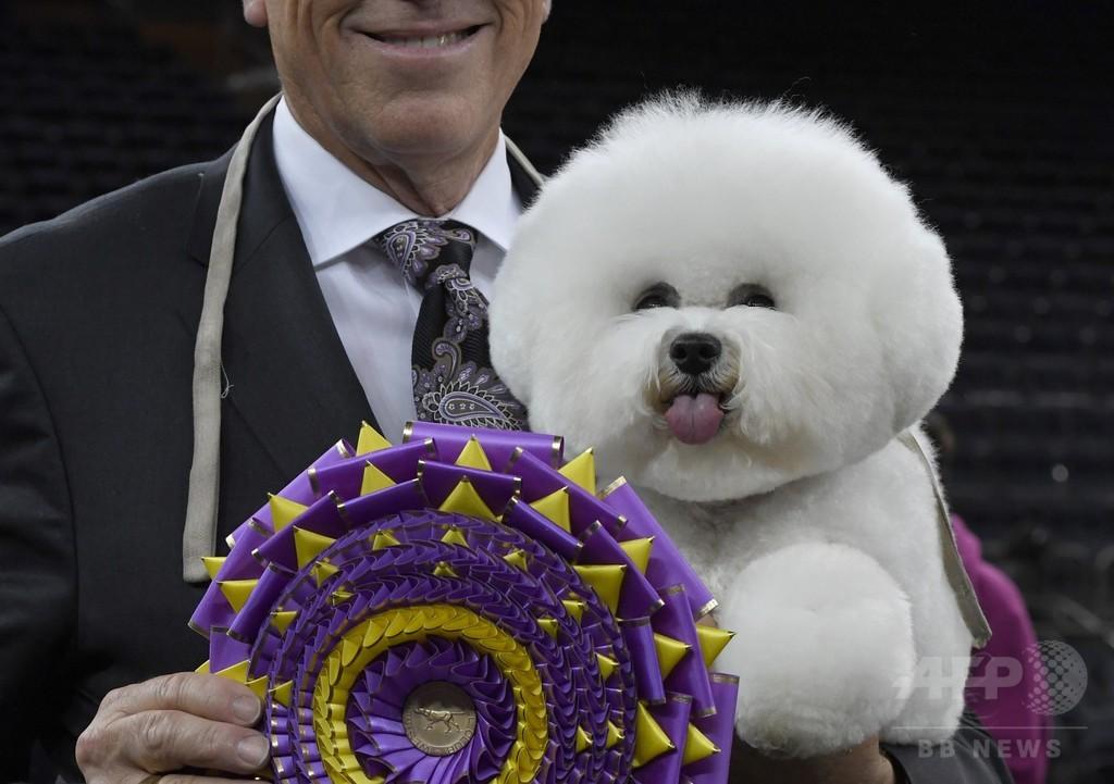 米伝統のドッグショー、今年はビションフリーゼに栄冠