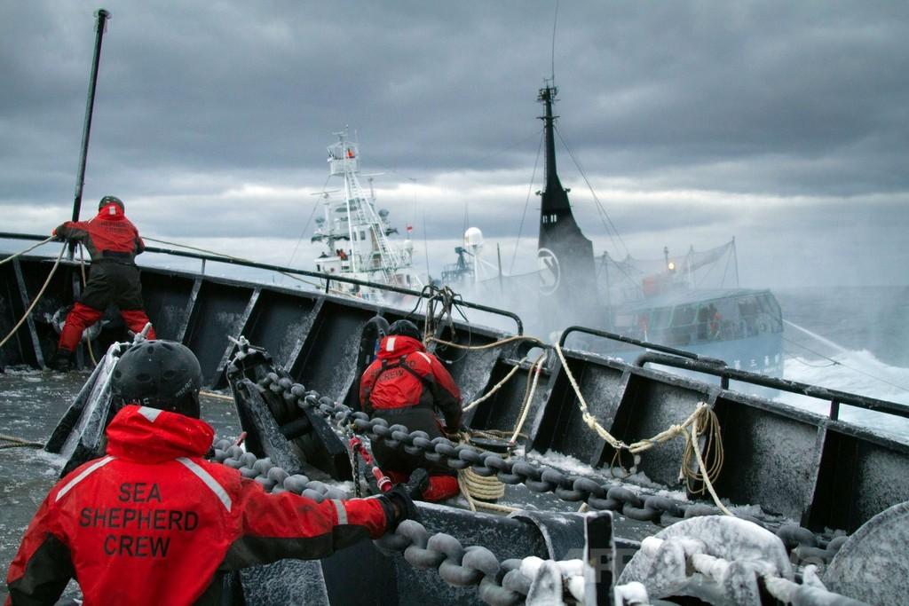 シー・シェパード、捕鯨船から「夜襲受けた」と主張