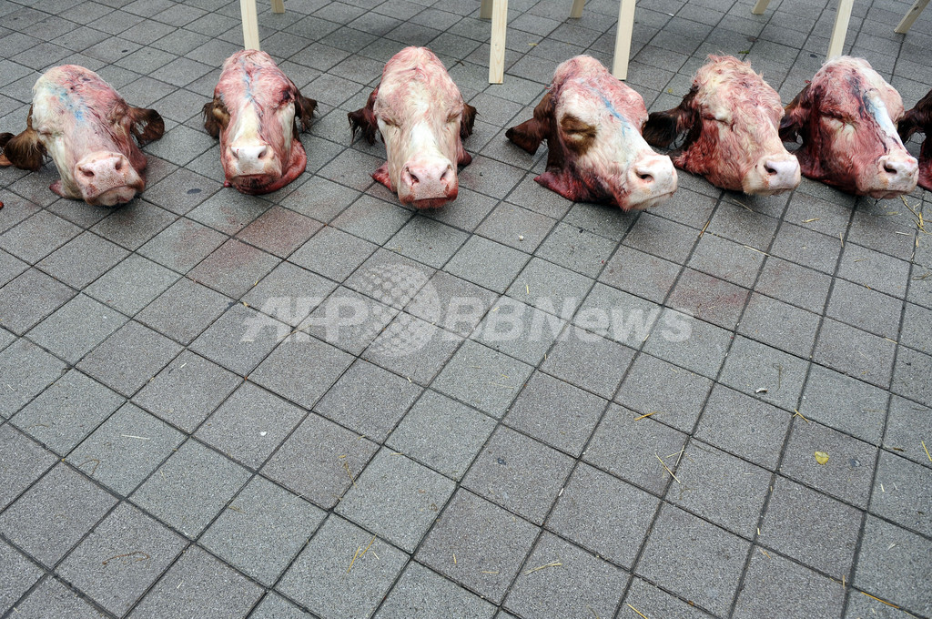 牛の頭並べて乳製品の価格下落に抗議、ハンガリー
