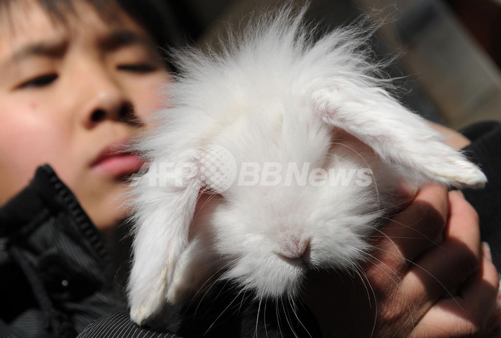 卯年はウサギ受難の年?動物愛護団体が懸念