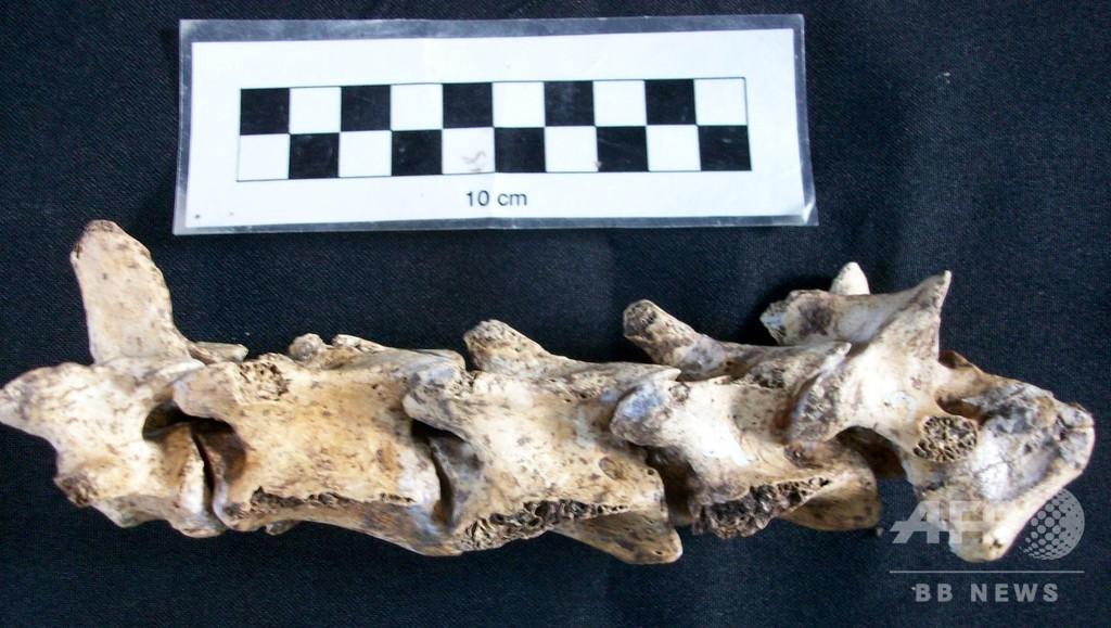 先史時代のシカ化石、アルゼンチンで発見
