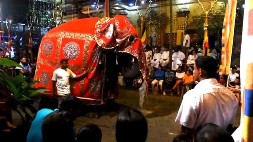 動画:にぎやかな仏教祭典、ゾウ50頭が大行進 スリランカ