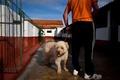 受刑者が犬を世話する刑務所ペットホテル、ポルトガル