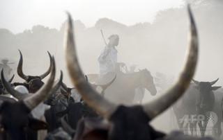 牛泥棒の集団が金鉱襲撃、36人死亡 ナイジェリア