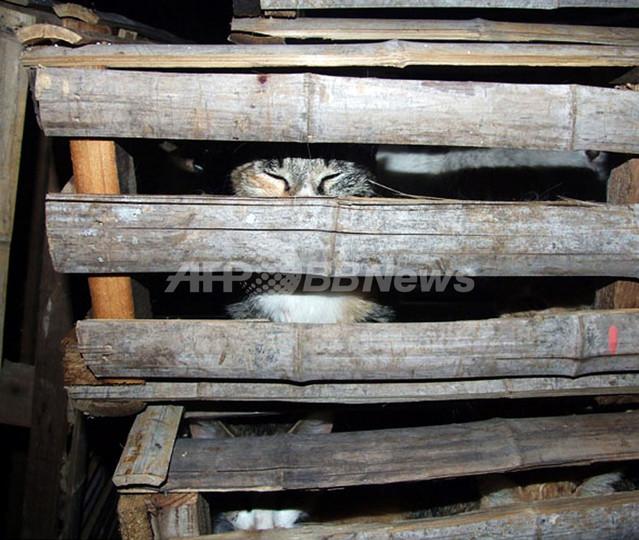 食べられる寸前!飼いネコ300匹を保護 上海