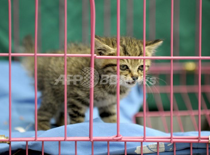 四川大地震で被災したペットたち、保護に奔走する動物愛護団体