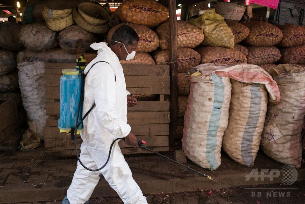 マダガスカルのペスト死者124人に 沈静化の兆しも