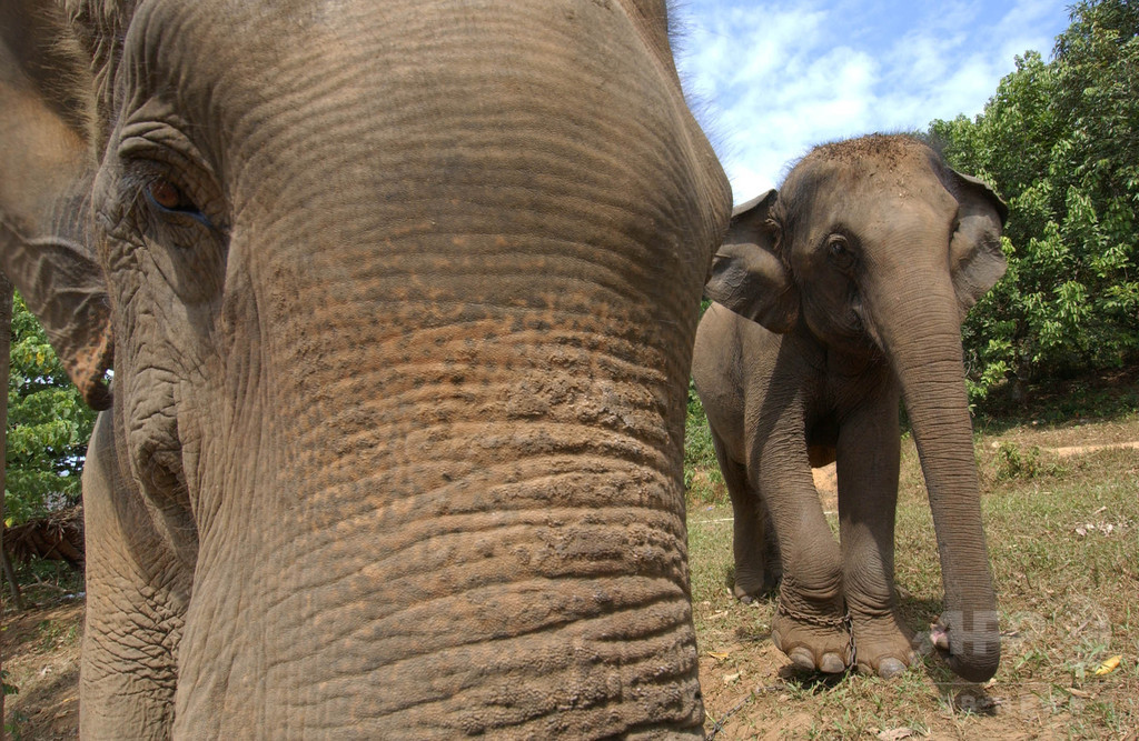 ゾウが車や飲食店を破壊、来園者ら仰天 タイ国立公園