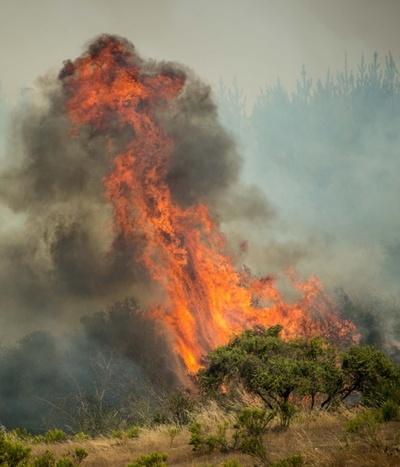 チリで続く過去最悪規模の山火事、鎮火目指し追加の対策費投入へ