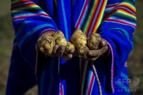 火星でのジャガイモ栽培を想定、ペルーで実験 NASA