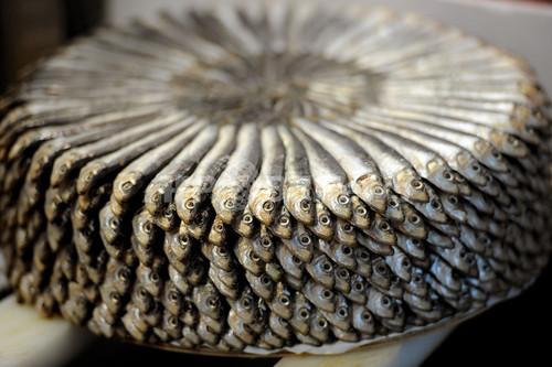 「不気味な魚」食べて海を守ろう、イタリアでスローフードイベント