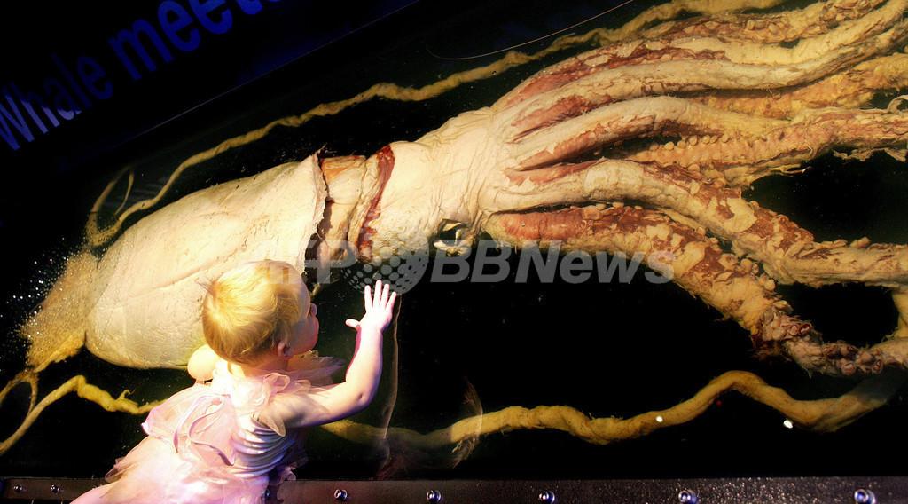 世界の深海に住む巨大イカ、全て同一種か DNA解析で判明