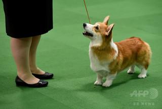 韓国人の男、隣家の犬を殺し肉食べる夕食会開催 飼い主を招待も