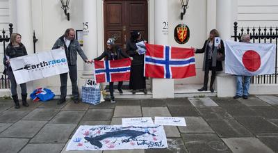 ノルウェー、今年のクジラ捕獲枠を発表 昨年と同じ1286頭