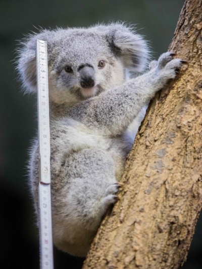 内心びくびく? 独動物園で毎年恒例の個体数調査