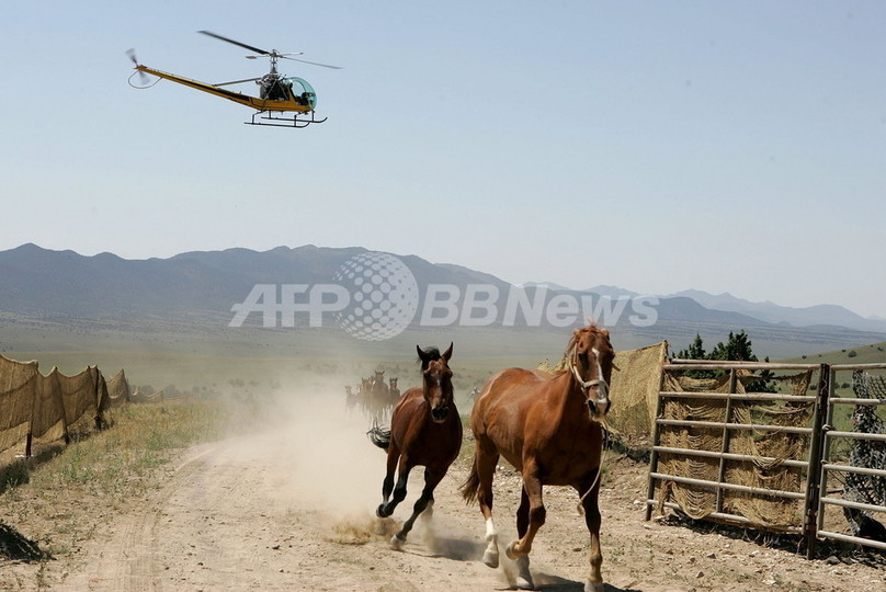 「開拓の象徴」野生馬の処分案に猛反対 米国
