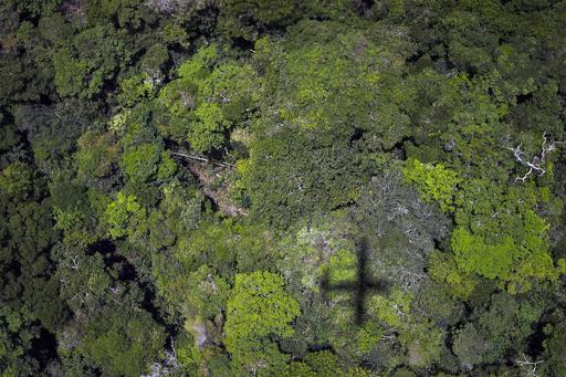 気候変動は大規模植林で緩和できる、ただし米国と同じ面積の森が必要 研究