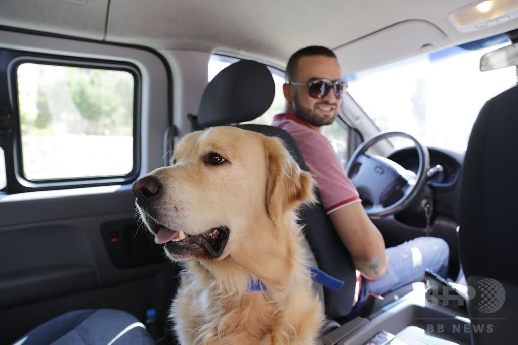 ペット送迎専門タクシー、レバノン