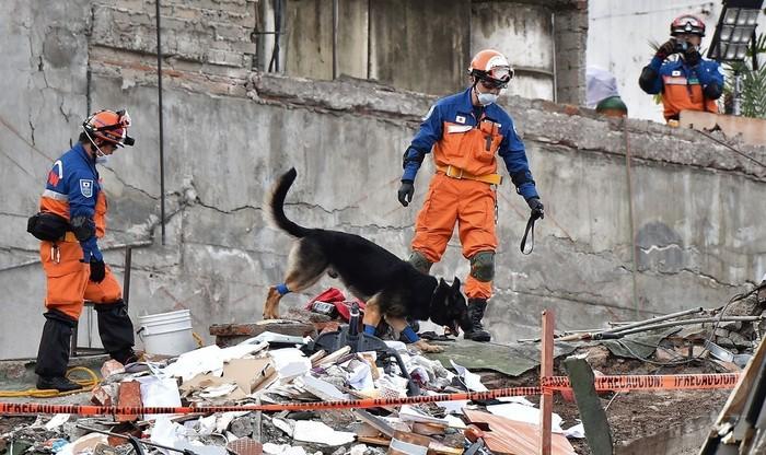 Resultado de imagen para メキシコ地震 日本 救助隊 救助犬