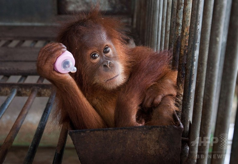 米国、インドネシアの債務削減で合意 自然保護政策条件に