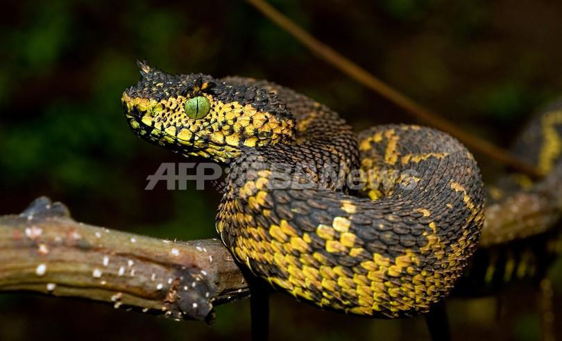 新種のヘビ発見、タンザニア