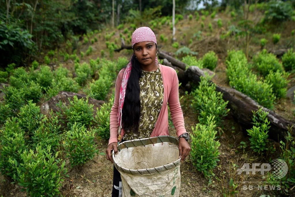 「他に手段はない」…麻薬組織のコカ農園で働くベネズエラ移民 コロンビア