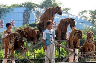 トラにかまれ飼育員死亡、遺族説明求める 中国