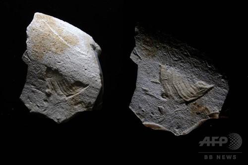 3万5000年前の石に「ツイッターの鳥」 仏で発見