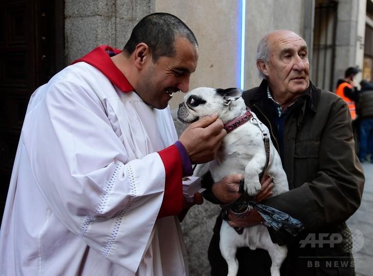 犬にも神の祝福、動物の守護聖人「聖アントニオ」の日 スペイン 写真9 ...