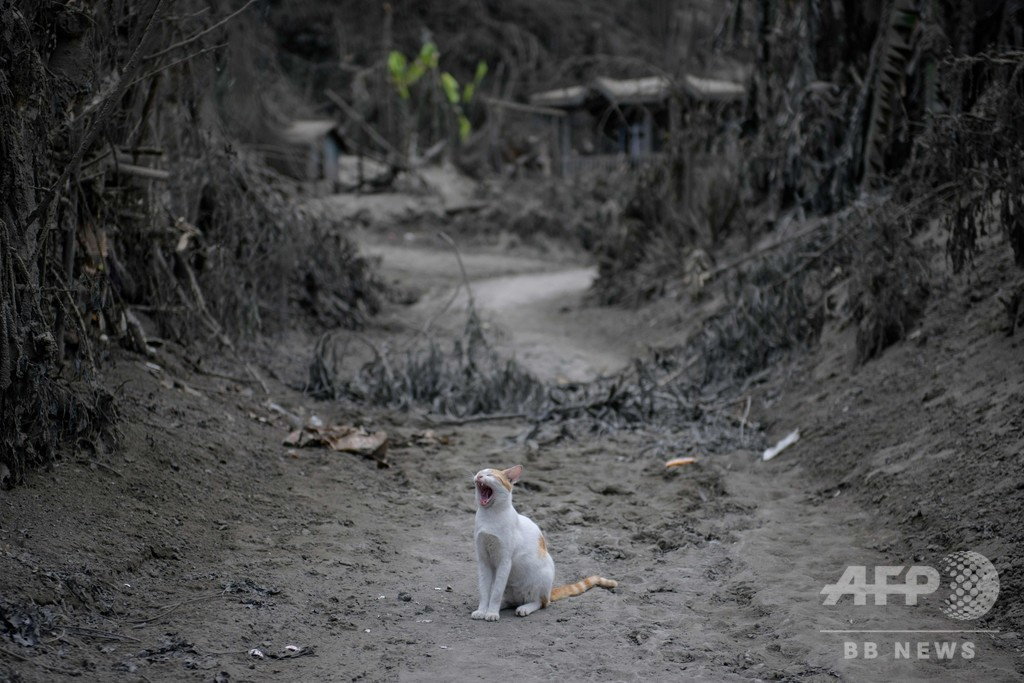 【写真特集】フィリピン・タール火山噴火