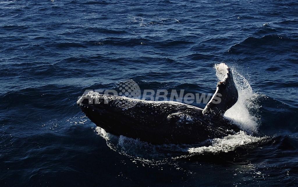 オーストラリア政府、YouTubeで日本の子どもに反捕鯨キャンペーン
